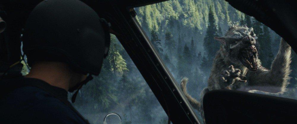 """""""Repül a farkas?... Világos!"""""""
